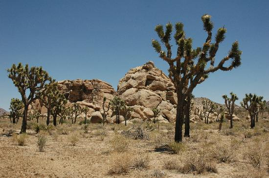 Circle C Lodge: Rocks and Joshua Trees