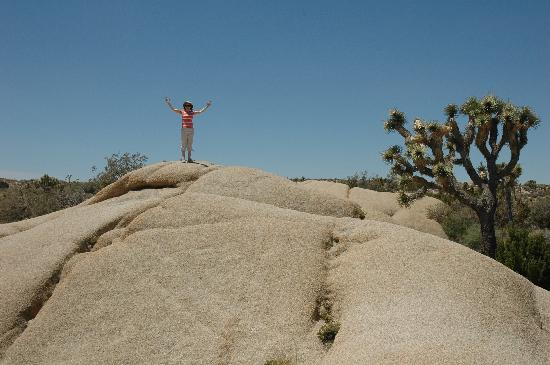 Circle C Lodge: Joshua Tree NP