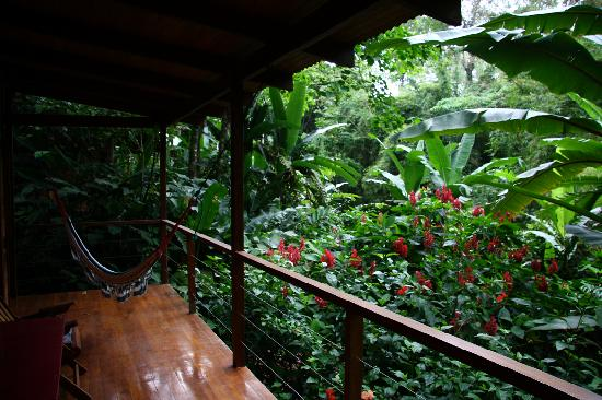 El Tucan Jungle Lodge: View from the bungalow