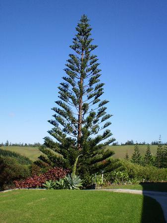 Norfolk Island Reviews