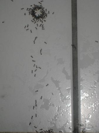 Super 8 Mokena/Frankfort /I-80: The ants go marching one-by-one....