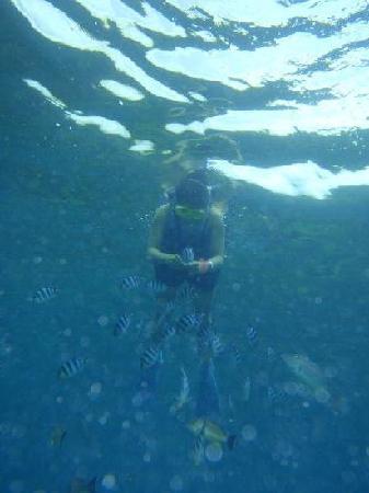 Fish Eye Marine Park: 海中から友達をとりました