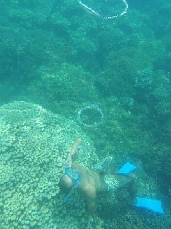 Fish Eye Marine Park: ガイドさん