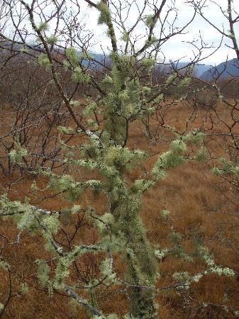 Glenorchy Lake House : Lichen