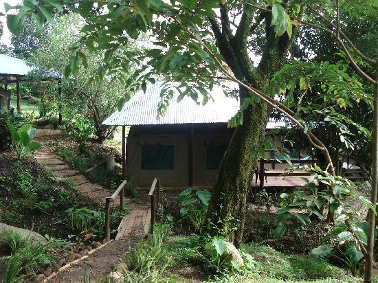 Lidwala Backpacker Lodge: bachkpackers tent