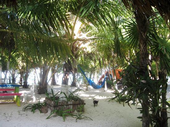 Bungalos Costa del Sol: Excelente Sombra