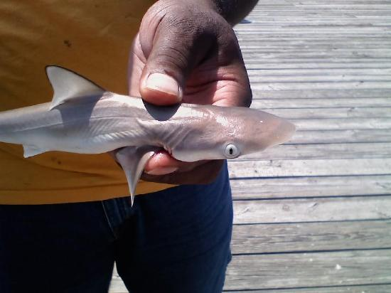 The Prince Resort: My husband holding a baby shark