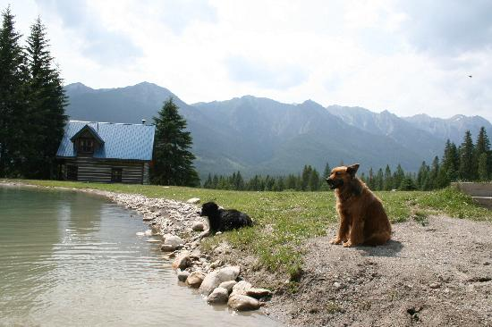 Nipika Mountain Resort: Rufus & Murphy keeping watch by the lake