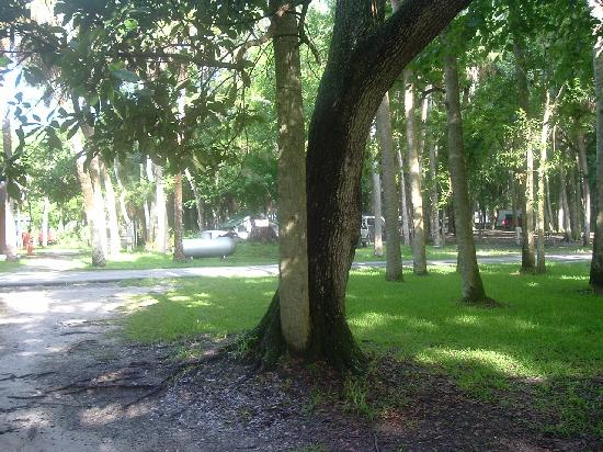 Manatee Hammock Campground: we enjoy this
