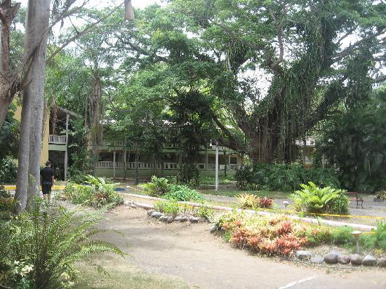 Coamo, เปอร์โตริโก: Arbol Milenario