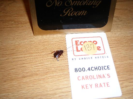 America's Best Inn & Suites Wilmington: NO SMOKING -MAY HARM ROACHES HEALTH