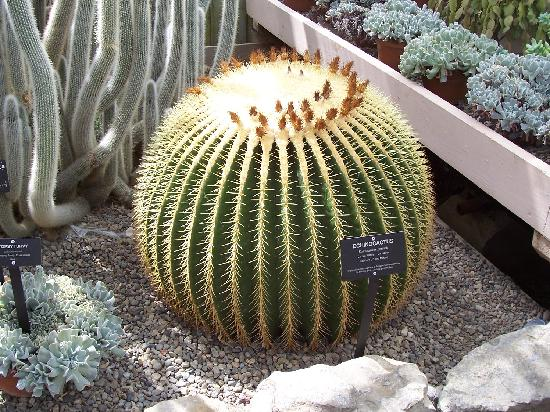 Buffalo and Erie County Botanical Gardens : Cactus