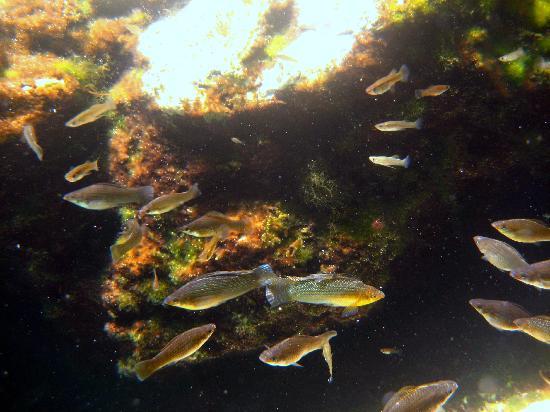 Small fish in Cenote Azul