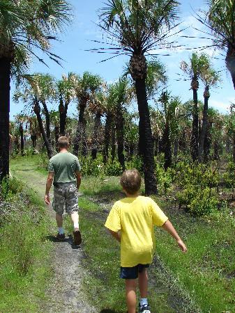 Caladesi Island State Park: The trails