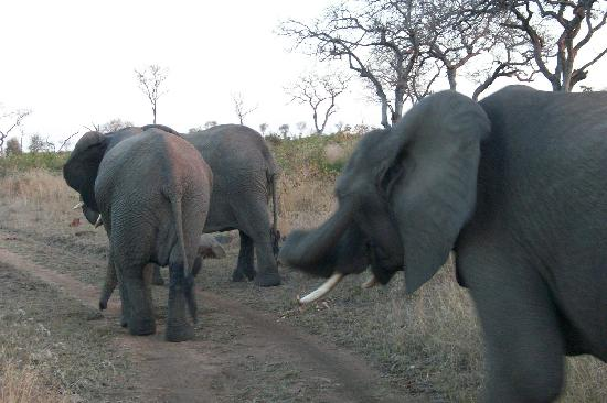 Londolozi Pioneer Camp: Elephants at Londolozi