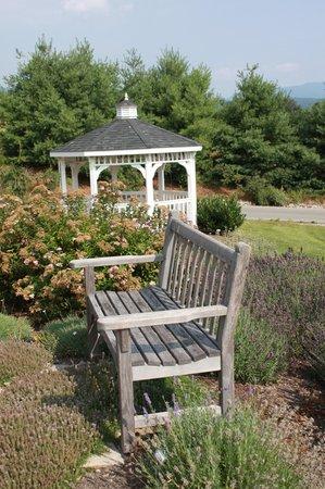 Brierley Hill Bed and Breakfast: Garden