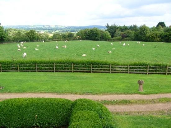 Jenkinsons Farm Bed & Breakfast: View from our bedroom window