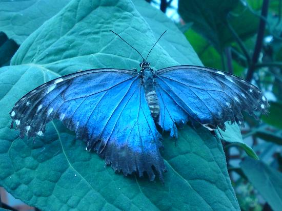 Stratford-upon-Avon Butterfly Farm : One of the more common types of butterfly in the farm