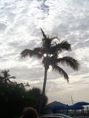 Pulau Sanibel, FL: pretty palm tree