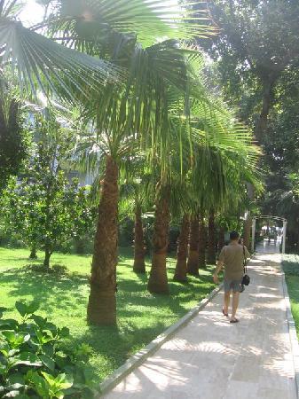 Okurcalar, Turchia: garden