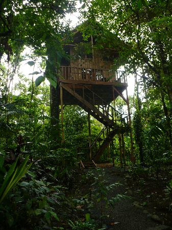 Tree Houses Hotel Costa Rica: Our Lofty Lodging