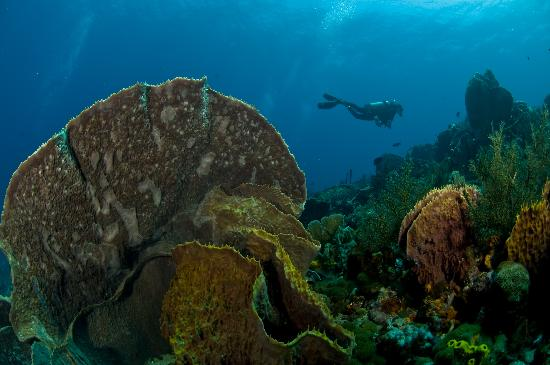 Manta Lodge: Underwater Paradise
