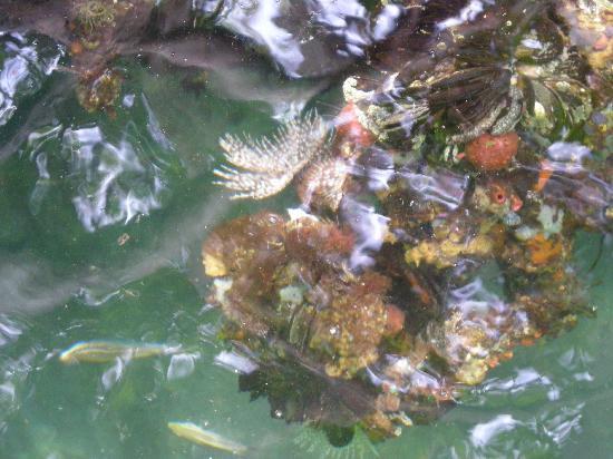 Cocoliso Island Resort : mar