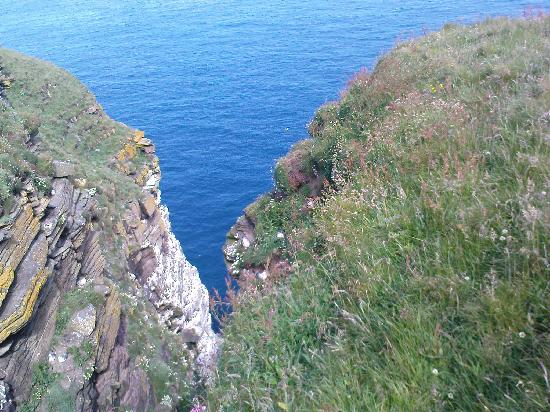 Puffin Express: On the coast