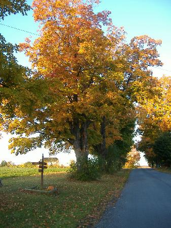 South Glenora Tree Farm B&B: view up the road towards Keuka