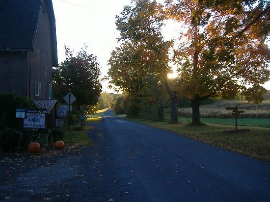 South Glenora Tree Farm B&B: view of the road towards Seneca