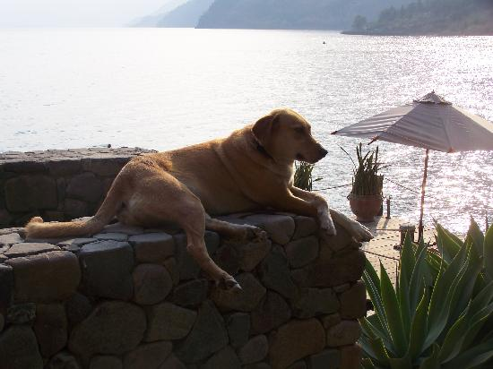 Laguna Lodge Eco-Resort & Nature Reserve: the hotel's dog... near the dock