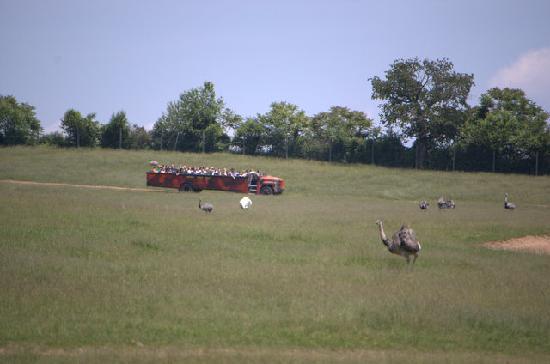 Lake Tobias Wildlife Park: The safari tour