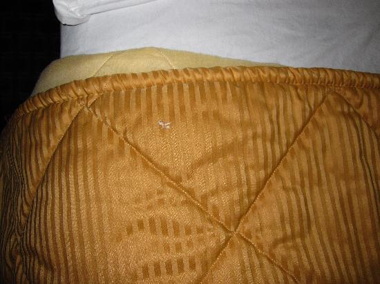 Comfort Inn: The bed spread was changed and was still dirty after they changed it