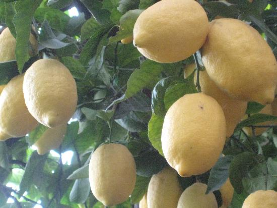 La Pergola Hotel: particolare terrazza di limoni