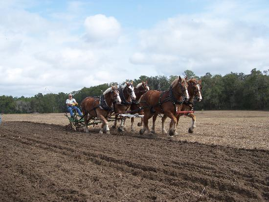 Dudley Farm Historic State Park: Plow days in Feb.
