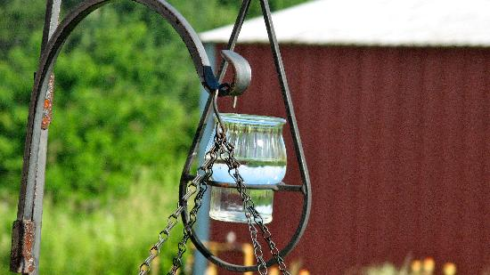 Hazen Manor : Hummingbird feeder