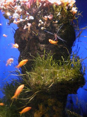 Underwater World Sea Life Mooloolaba: TANKS INSIDE UNDERWATER WORLD