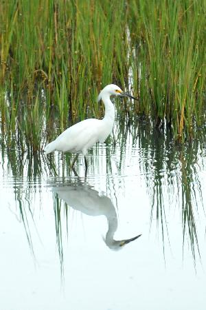 Beaufort, Carolina Selatan: The Birds Of HISP