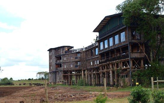 Treetops Lodge: Treetops Hotel
