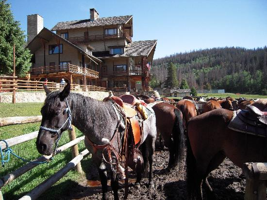Granby, CO: Your horse is ready to go!