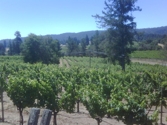 Handley Cellars Winery: Vineyards at Handley Winery