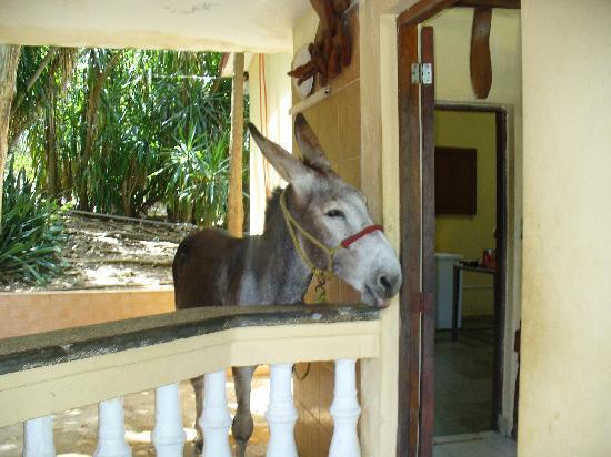 Villa Islazur Mirador de Mayabe: El burro me encanto!!!!Es un lugar presioso....