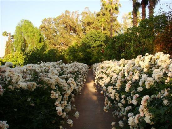 La Gazelle d'Or : The Roses