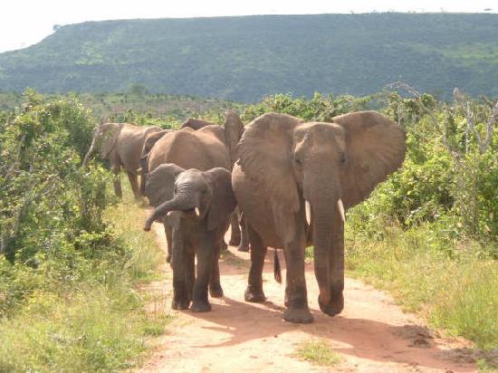 Travellers Mwaluganje Elephant Camp (Mombasa, Kenya