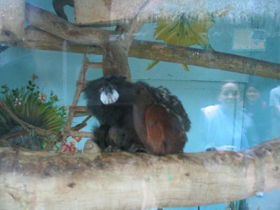 Parque de las Leyendas (Zoo): Little Monkey