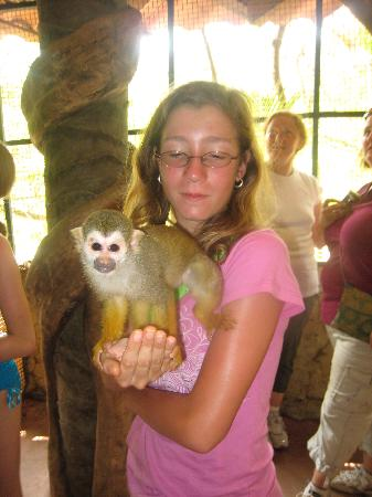 Los Veranos Canopy Tour: Monkey