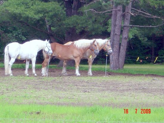 Farm by the River Bed and Breakfast with Stables: Beautiful horses!