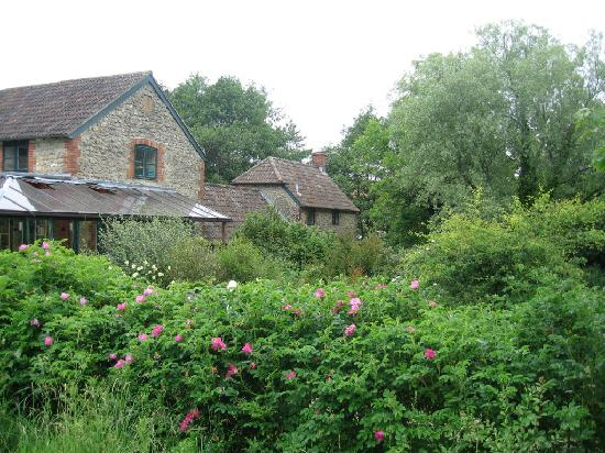 The Kingcombe Centre garden