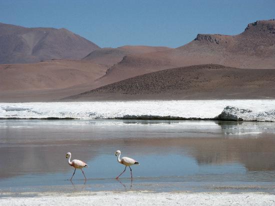 Altiplanico Atacama: Red Lagoon