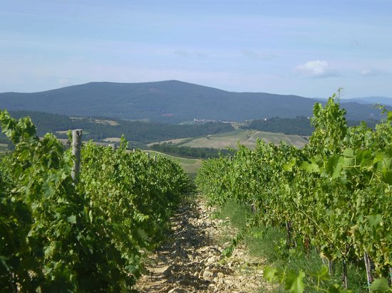Walk About Tuscany Tours : A view
